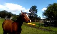Arklys žaidžia su garsiniu žaisliuku
