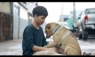 Pirmasis apkabinimas benamiams šunims