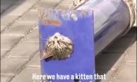 Juokingas australas apžvelgia įstrigusį katuką