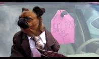 Šuo mašinų pardavėjas