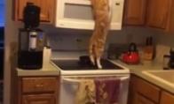 Beždžionėlė katė, ieško skanėstų