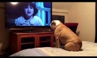 Šunelis įsijaučia į siaubo filmą