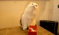 Katė groja tereminu