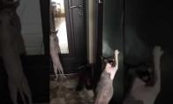 Katiniukas, kuris jaučia ritmą