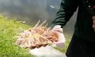 Kūdikis - jūrų šlykštynė