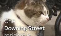 Katinas Laris - DB vyriausybės gyventojas