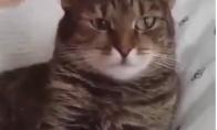 Sukonfūzintas katukas