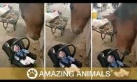 Arklys supa mažylį