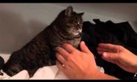 Katė nenori lipti iš spintos