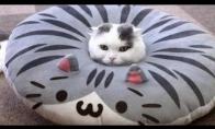 Smagiausių kačių vaizdelių rinkinys