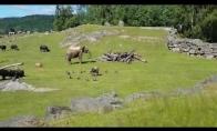 Kerėpla drambliukas