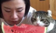 Katukui patinka arbūzas