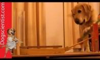 Protinis šunų dresiravimas
