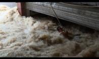 Vyro tik per plauką nenuplauna potvynis