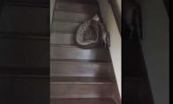Kaip katė persikrausto