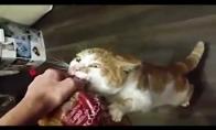 Katinas - bulkų žudikas