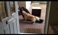 Geriausia dovana šuneliui