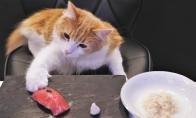 Kaip pagaminti katei suši?
