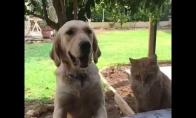 Šuo netyčia įkanda katinui