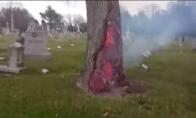 Medis iškart po to, kai į jį trenkė žaibas