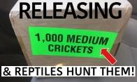 1000 vabzdžių prieš reptilijas