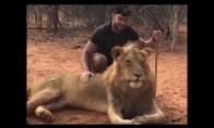 Čiaudintis liūtas išgąsdina vyrą