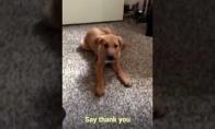 "Šunelis sako ""Thank You"""