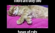 Katės būna dviejų tipų