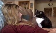 Katė prašo, kad ją glostytų