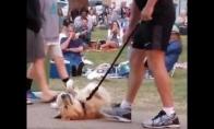 Kai šunelis nenori palikti parko