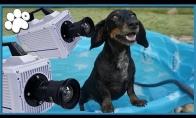 Sulėtintos šuns ausys