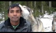 Draugiškas vilkas