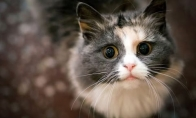 Kaip katės sutinka savo šeimininkus po ilgo laiko