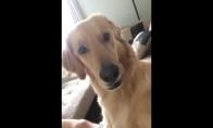 Šuo sužino, kad turės broliuką