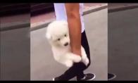 Šuneliui nepatinka pasivaikščiojimai