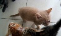 Mieli išalkę kačiukai