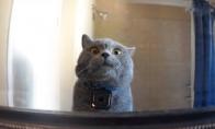 Ką veikia katė, kol tavęs nėra namie