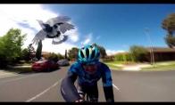 Paukštukui nepatinka dviratininkas