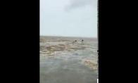 Uraganas Irma išsiurbė vandenyną