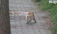 Neįgali katė turi draugą apsauginį