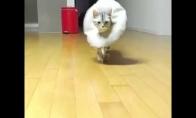 Katė - manekenė