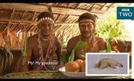 Gentys reaguoja į poliarinius lokius