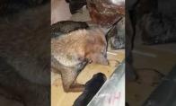 Mažų šunyčių gelbėjimo operacija