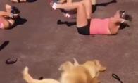 Sportuojantis šuo
