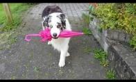 Šunelio šokis su skėčiu