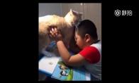 Sunku daryti namų darbus, kai augini katę