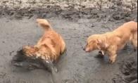 Šuo džiaugiasi purvu