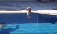 Išsigandusių kačių video rinkinys