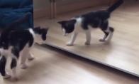 Kačiukas žaidžia priešais veidrodį