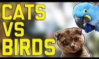 Juokingų kačių ir paukščių rinkinys